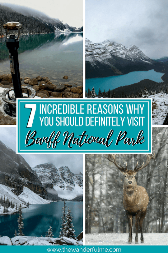 Banff National Park is a little slice of heaven. With towering mountains, vibrant wildlife, breathtaking sites, fantastic hiking, and an adorable little village, there's something for everyone here. Check out these 7 reasons why you should visit Banff National Park this year! | #banff #banffnationalpark #canada #nationalparks #travel #inspiration #thingstodo