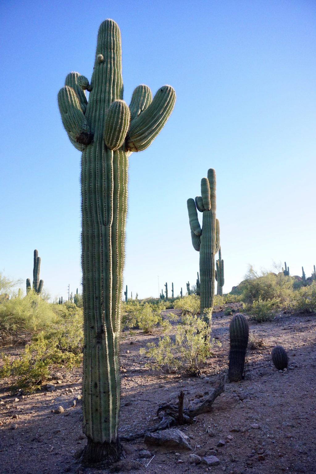 23 Pictures to Convince You to Visit the Desert Botanical Garden