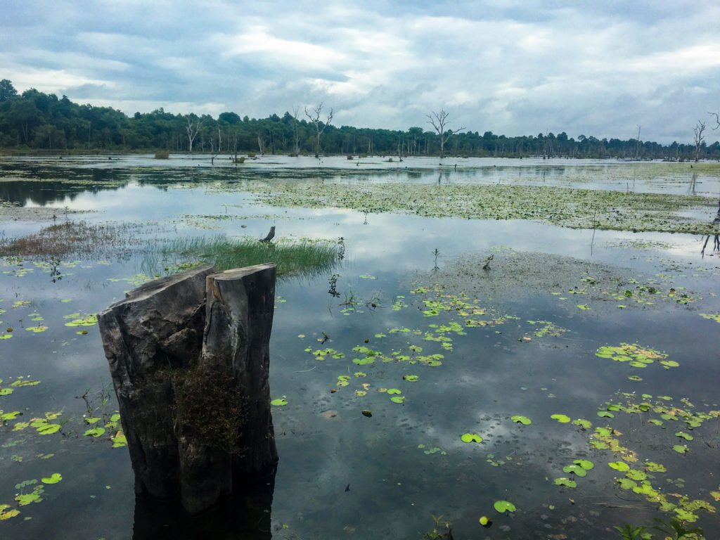 Mangrove Marshes • Remarkable Tips to Make Traveling to Cambodia Easier | The Wanderful Me