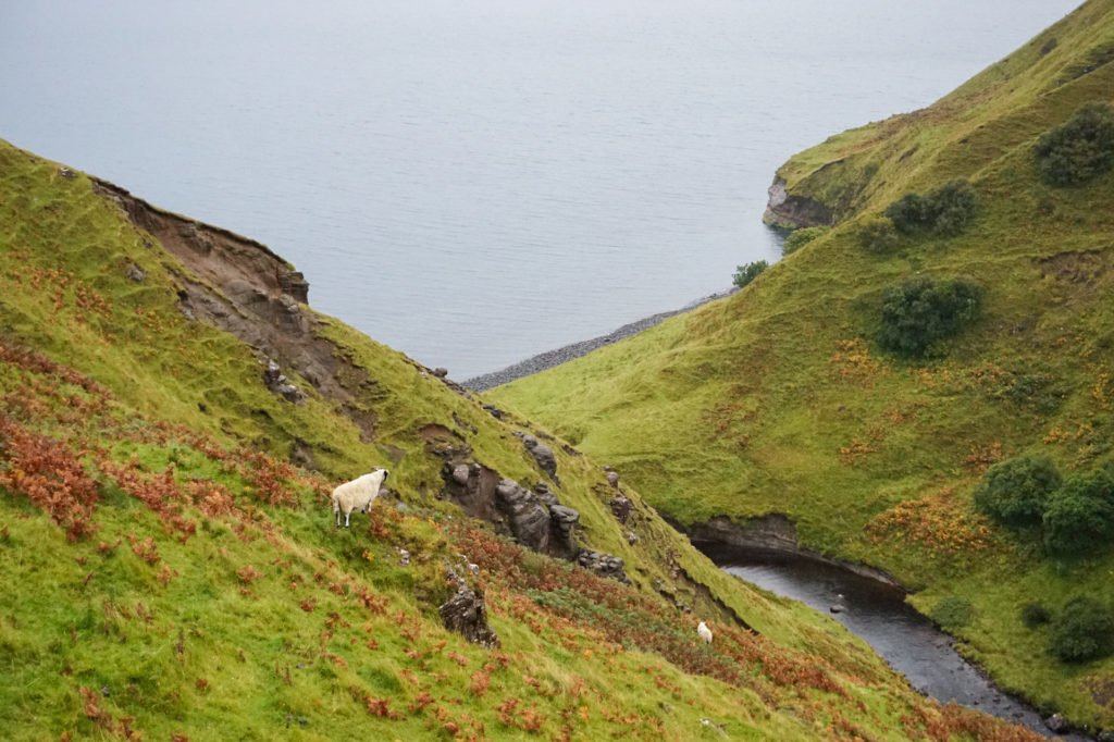 A Sheep •3-Day Tour to Skye, The Highlands, and Loch Ness | The Wanderful Me