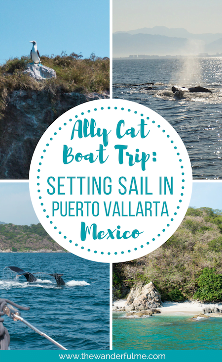If you love breathtaking ocean views, unlimited drinks, delicious food, secret beaches, adorable Blue-footed Boobies, swimming with manta rays, and watching majestic Humpback whales, you'll definitely want to go on an Ally Cat boat trip in Puerto Vallarta, Mexico! | #mexico #puertovallarta #boattrip #allycat #sailing #travel #traveltips #adventure