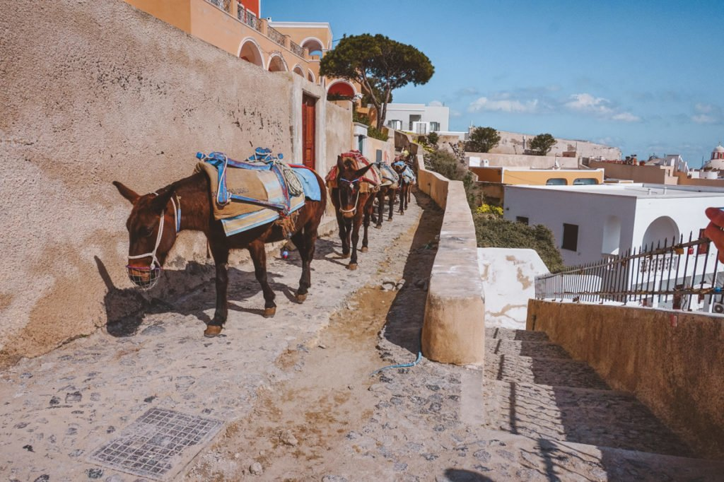 Sad donkeys in Santorini, Greece. • Day Trip to Santorini from Athens Guide.