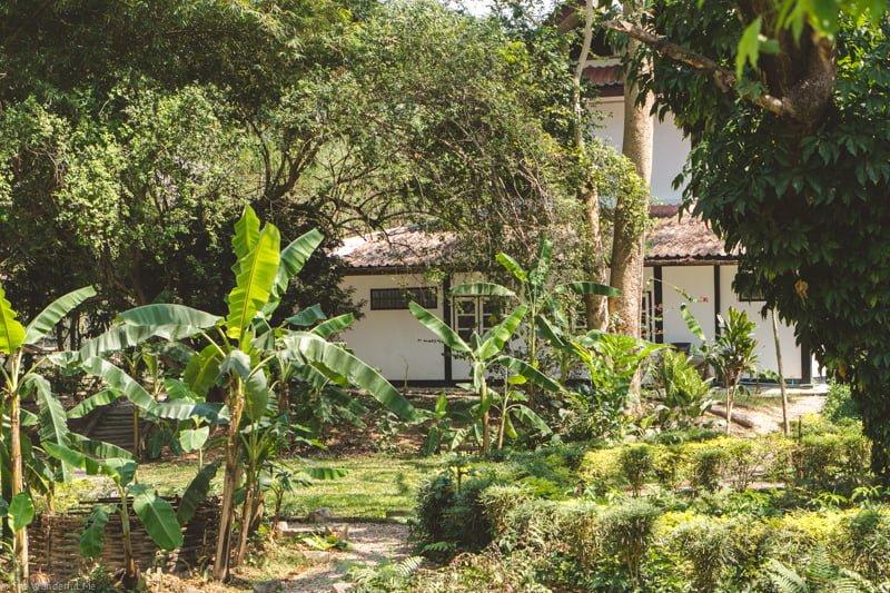 The lush jungle surrounding the elephant sanctuary.