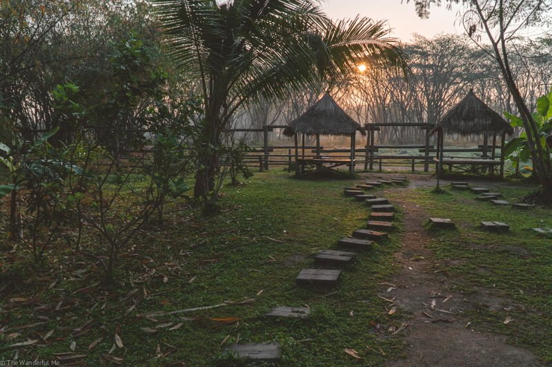 Sunset at EVT with bamboo huts in the background and the glow of the new day sun filtering through the tree branches.