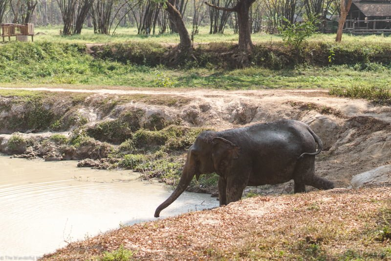 An elephant having a splash in Elephant Valley Thailand's man-made pond!