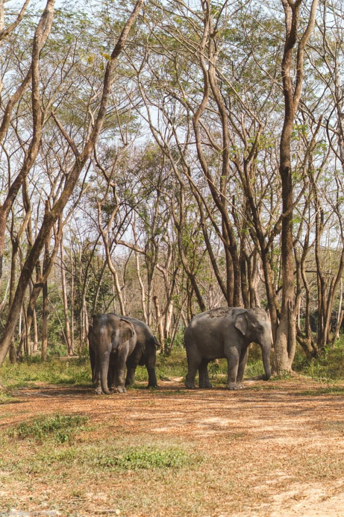 The elephants chilling out under the canopy of trees.
