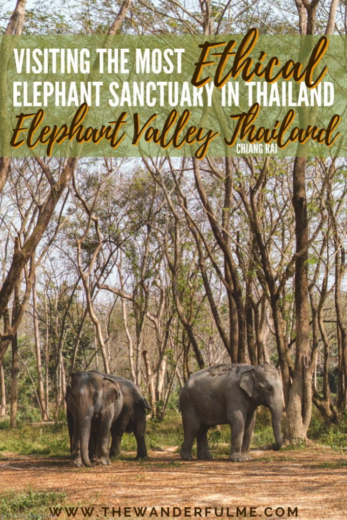Thinking about visiting an elephant sanctuary in Thailand this year? Travel to the most ethical one in Chiang Rai, Elephant Valley Thailand! No bathing, hugging, or excessively touching necessary. Doesn't get more ethical than that! #ElephantSanctuary #Thailand #Elephant #SustainableTravel #EthicalTravel