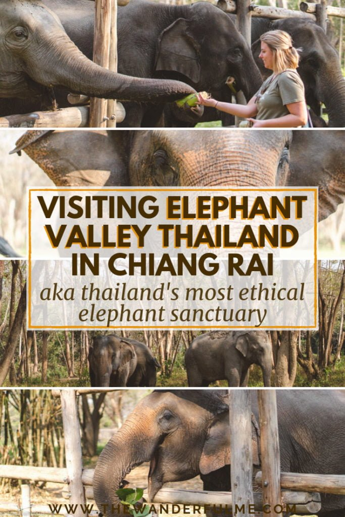 Planning a trip to Thailand and want to visit an elephant sanctuary? In Chiang Rai, you'll find no doubt the most ethical elephant sanctuary in Thailand! Read all about it. #EthicalTravel #Elephant #Sanctuary #Thailand