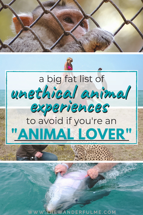 Think you're an animal lover? Here's a big fat list of unethical animal experiences you could be participating in that says otherwise! | #responsibletravel #sustainabletravel #ethical #ethicaltravel #unethical #animal #travel #tips