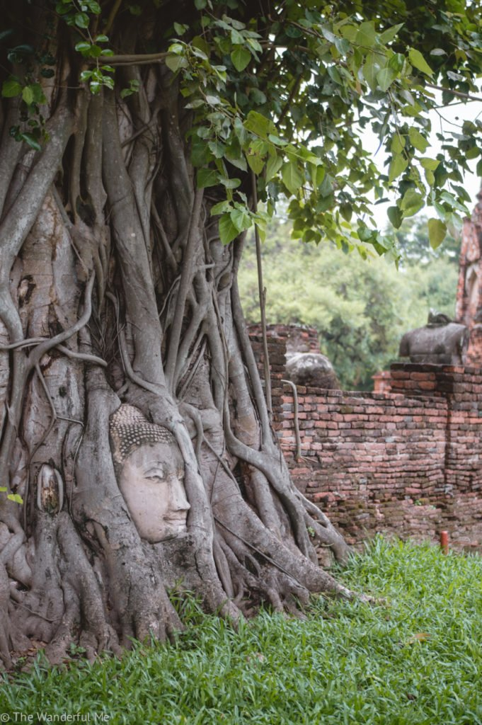 The most popular thing to see at Wat Mahathat -- the Buddha head entwined in an ancient tree's roots. Definitely a must see on any Ayutthaya day tour.