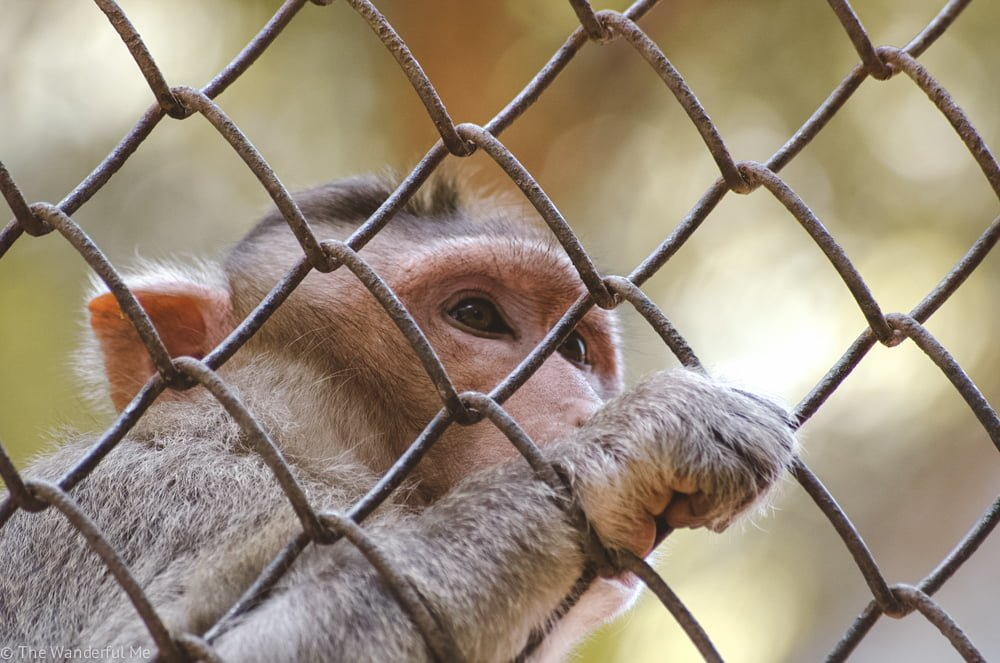 Zoos are some of the most unethical places on earth. There's nothing cool or ethical about keeping sentient beings in cages.