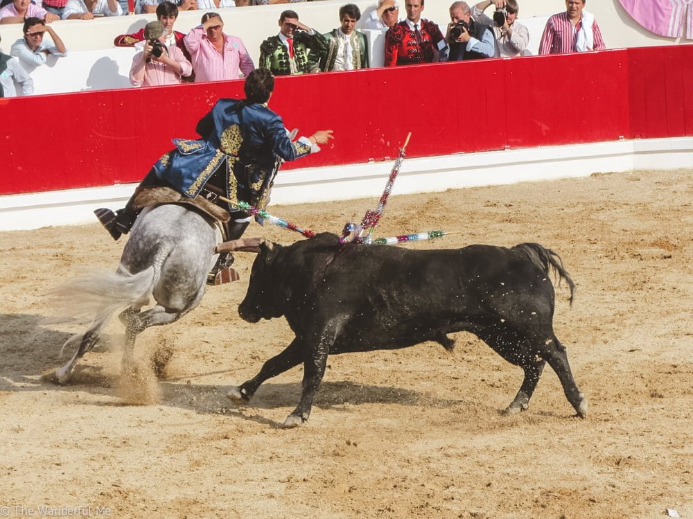 Bullfighting and running with the bulls is one of the most popular sports where humans get off from watching an animal die. Not ethical, whatsoever.