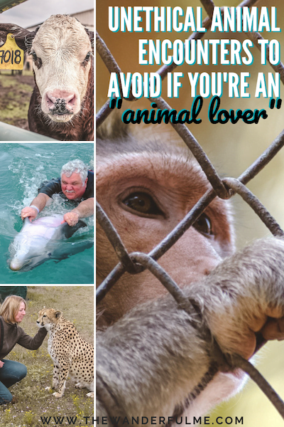 "Thinking of doing some travel intertwined with a few awesome animal experiences? Here are the most unethical animal encounters you need to avoid if you're an ""animal lover."" 