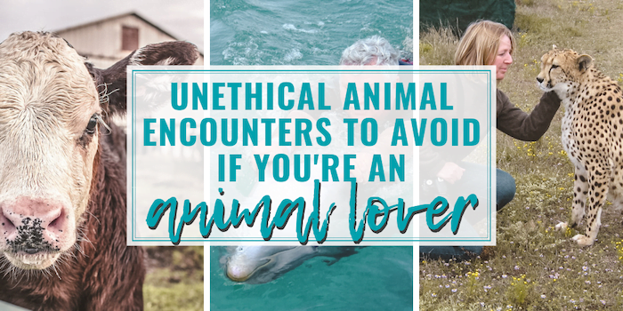 "A big fat list of the most unethical animal encounters to avoid if you're an ""animal lover"" -- because the world could use a bit more good! 