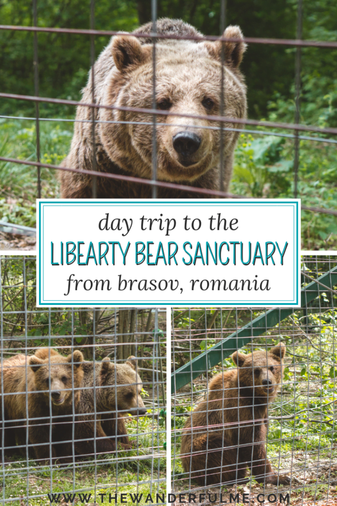 Looking to visit the Libearty Bear Sanctuary in Zarnesti, Romania? Here's how to do it on a day trip from Brasov! | #romania #libearty #sanctuary #brasov #ethicaltravel #europe