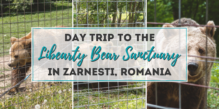 Day Trip to the Libearty Bear Sanctuary Zarnesti from Brasov, Romania •The Wanderful Me