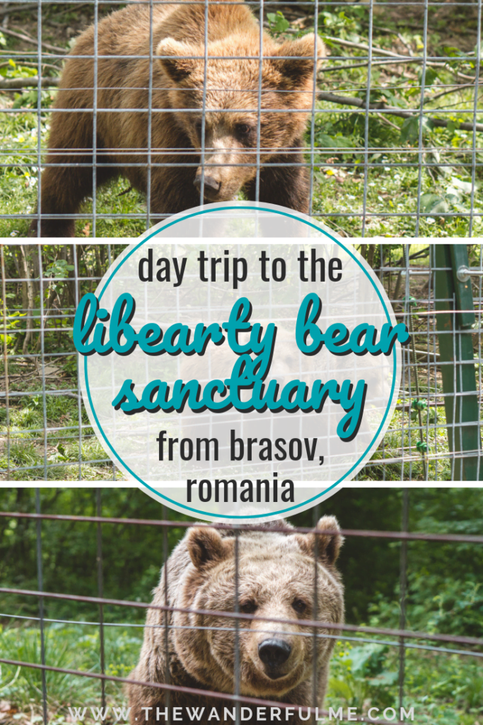 If you're wanting to visit a unique attraction, check out the Libearty Bear Sanctuary Zarnesti in Romania! Here's how you can go on a day trip to the sanctuary from Brasov. | #brasov #romania #libeartysanctuary #ethicaltravel #europe