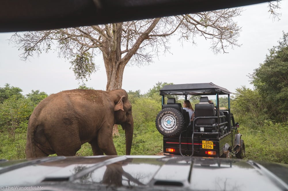 A male elephant curiously makes it way towards a jeep in front of our own.