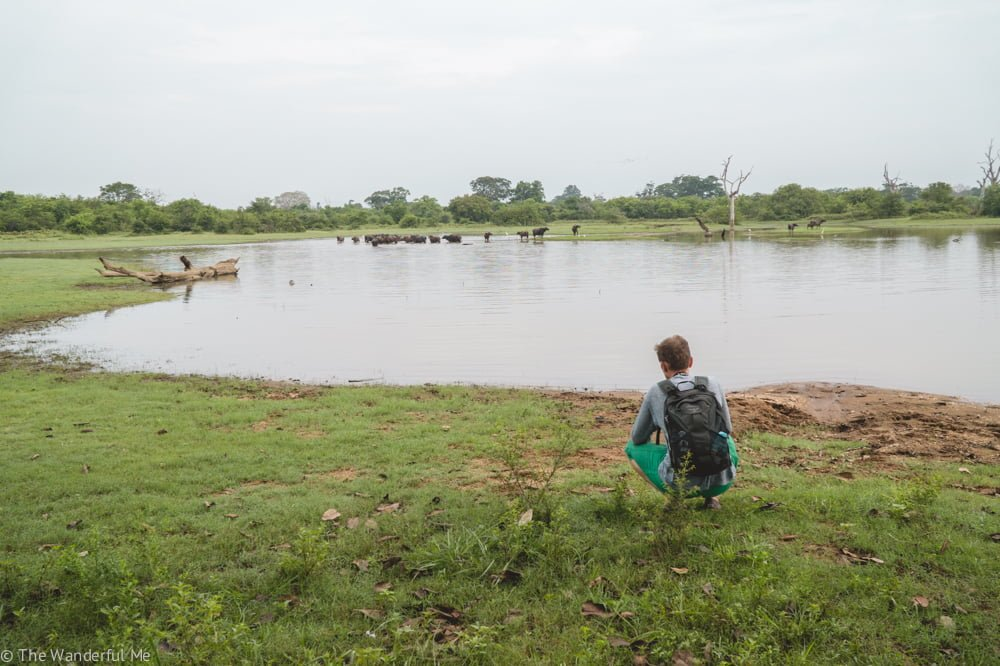 Dan crouches down to take photos of the water buffalo splashing around and wading about the marshland waters.