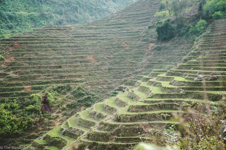 In this Southeast Asia backpacking travel guide, you'll find hiking through the rice paddies in Vietnam, like in this photo, is a must-do activity!