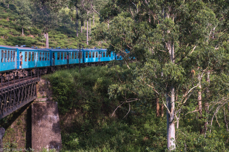 A blue train going through the lush jungle of Sri Lanka.