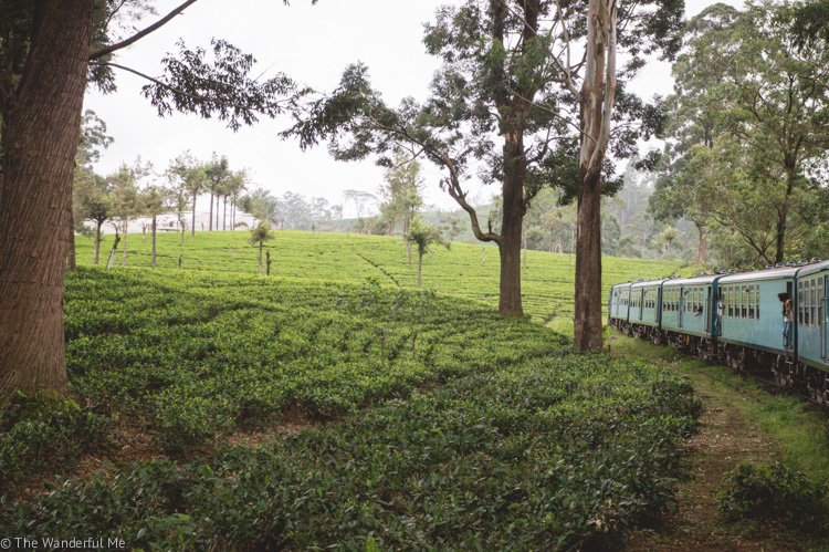 A blue training rumbling through lush tea plantations in Sri Lanka.