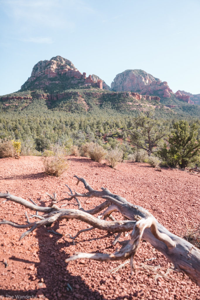 A withered dead tree branch in the foreground with a rough-looking red rock mountain in the background.