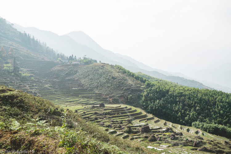 Layers and layers of both gorgeously green rice fields and Sapa mountains.