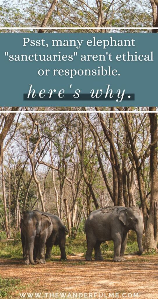 """Thinking about traveling to Asia -- maybe somewhere like Thailand, Laos, or India -- where you can experience an ethical elephant encounter? Well, sorry to break it to you but that so-called """"sanctuary"""" or """"elephant rescue center"""" isn't ethical or responsible whatsoever if they offer bathing, upclose feedings, or selfie opportunities. Here's why. #ethicaltravel #ethical #sustainable #elephantsanctuary #ethicalelephant #sanctuary #sustainabletravel"""