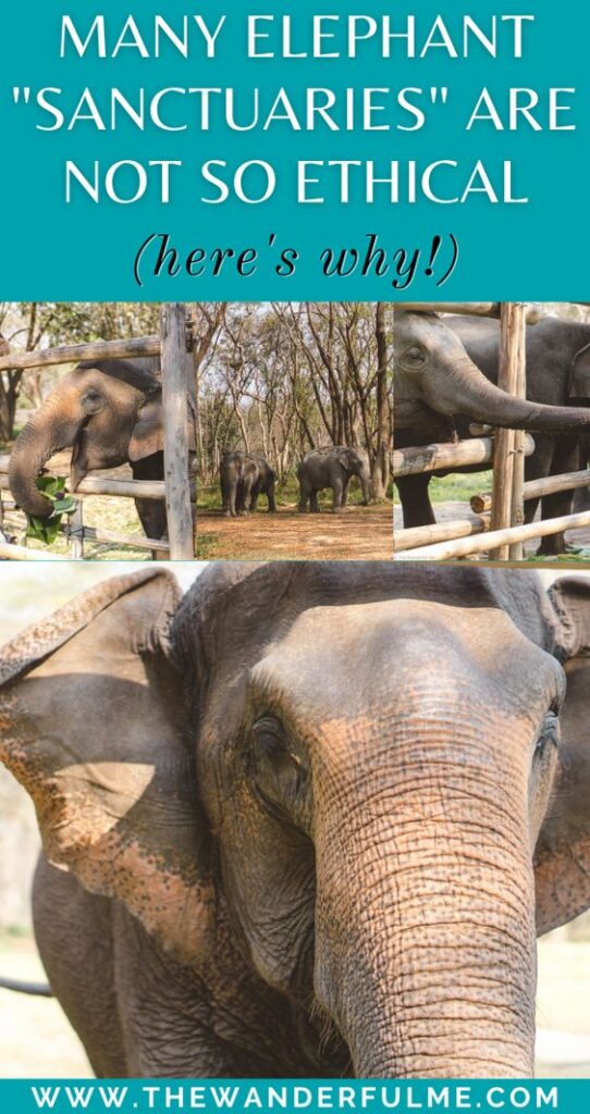 """Looking to experience an ethical elephant encounter? Well, sorry to break it to you but that so-called """"sanctuary"""" or """"elephant rescue center"""" isn't ethical or responsible whatsoever if they offer bathing, upclose feedings, or selfie opportunities. Here's why. #ethical #elephant #sanctuary #ethicalelephant #sustainable #sustainabletravel #elephantsanctuary"""